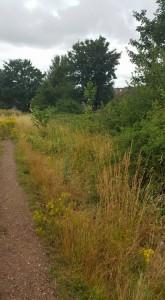 Windhill Aven Overgrown Site